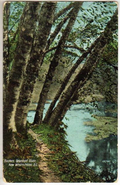 postcard_brunette_creek_1911